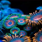 кораллы 150x150 Белые камни